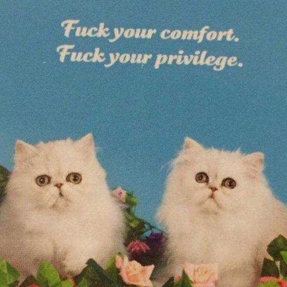 gay cats